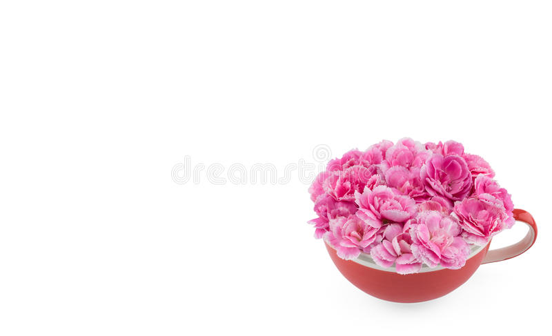 Pink carnation flowers bouquet in red tea cup royalty free stock images