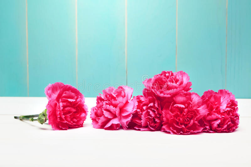 Pink carnation flowers royalty free stock image
