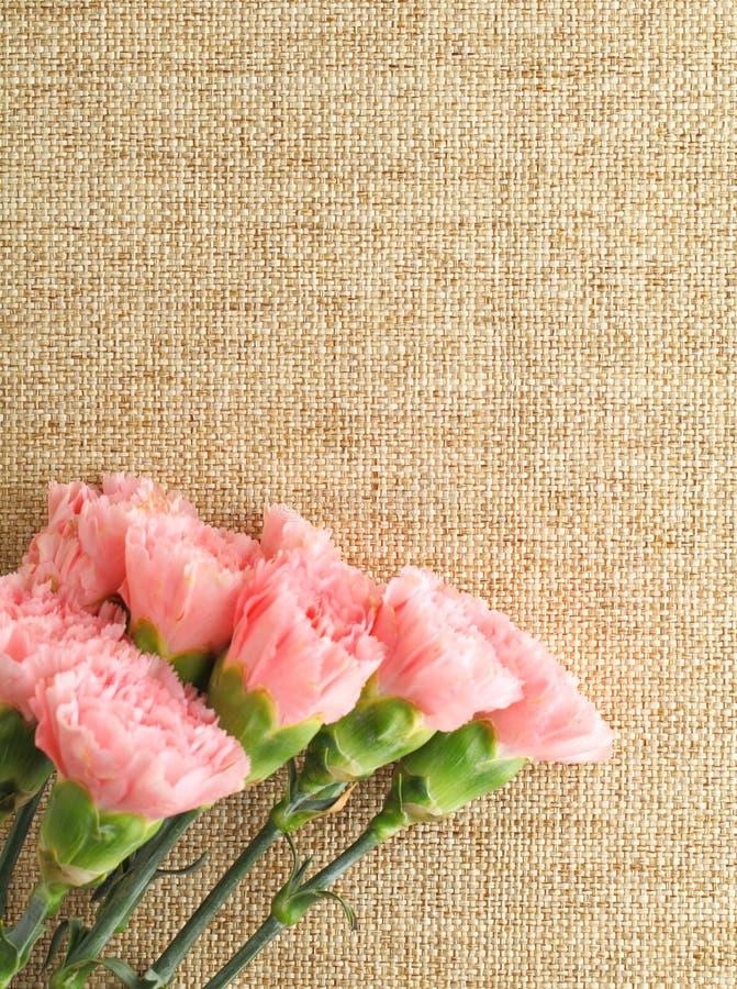 Pink carnation. Carnation on the linen pattern royalty free stock photo