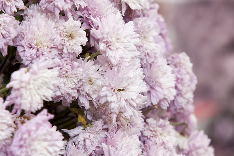 Download Pink carnations stock photo. Image of bouquet, plant - 23531818