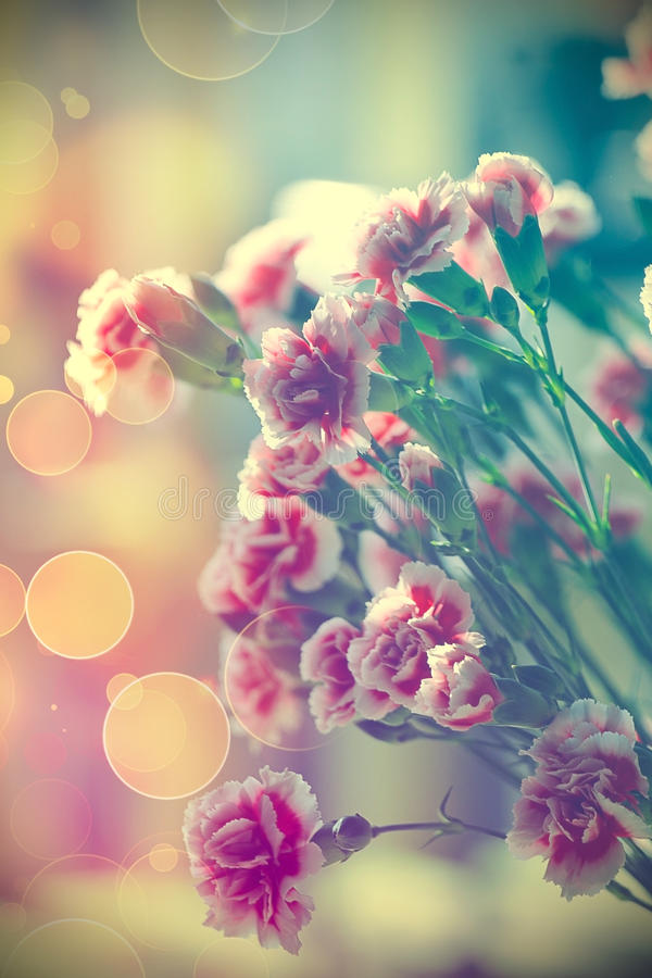 Free Pink Carnations Stock Photography - 49586512
