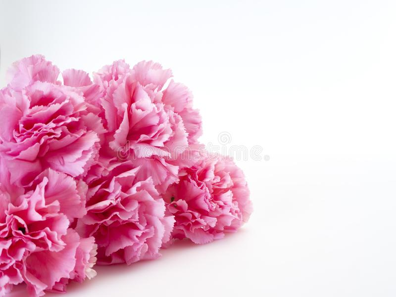 Pink carnations flower for Mother's day royalty free stock photography