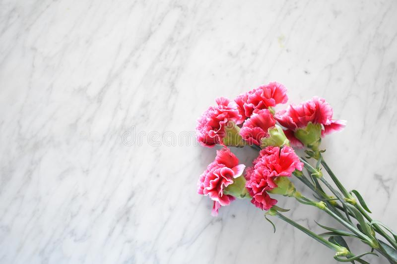 Pink carnations on a marble table. A close up of magenta carnations against a white marble table stock images