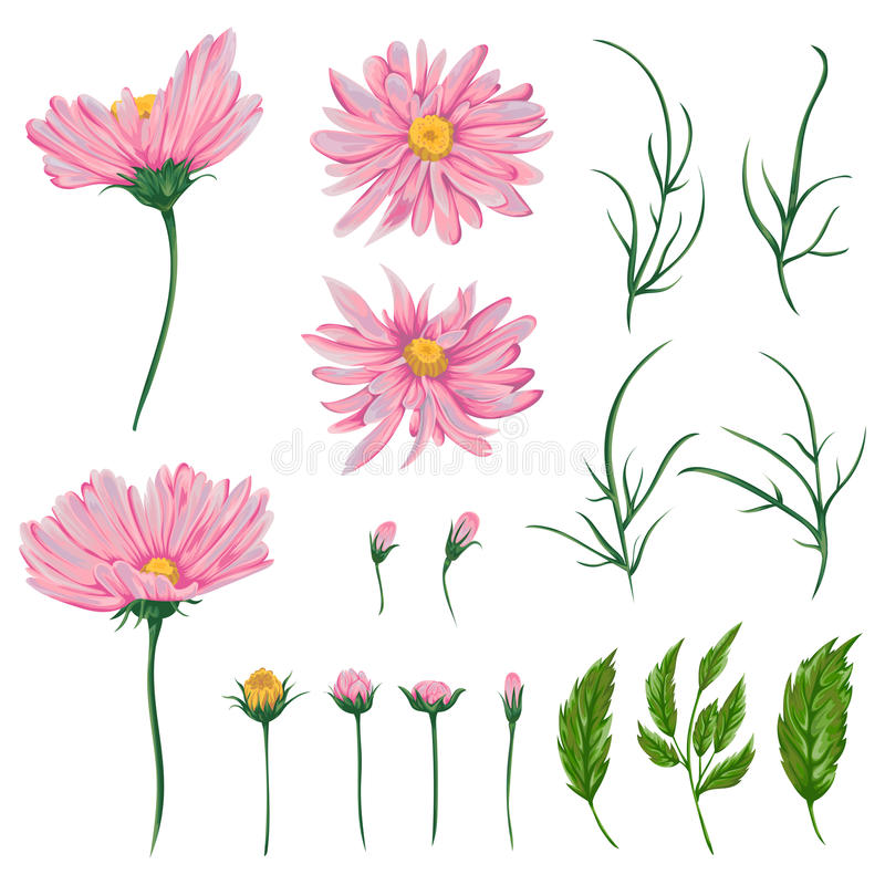 Download Pink Chamomile Flowers Leaves And Buds Set Rustic Floral Design Elements Stock Vector