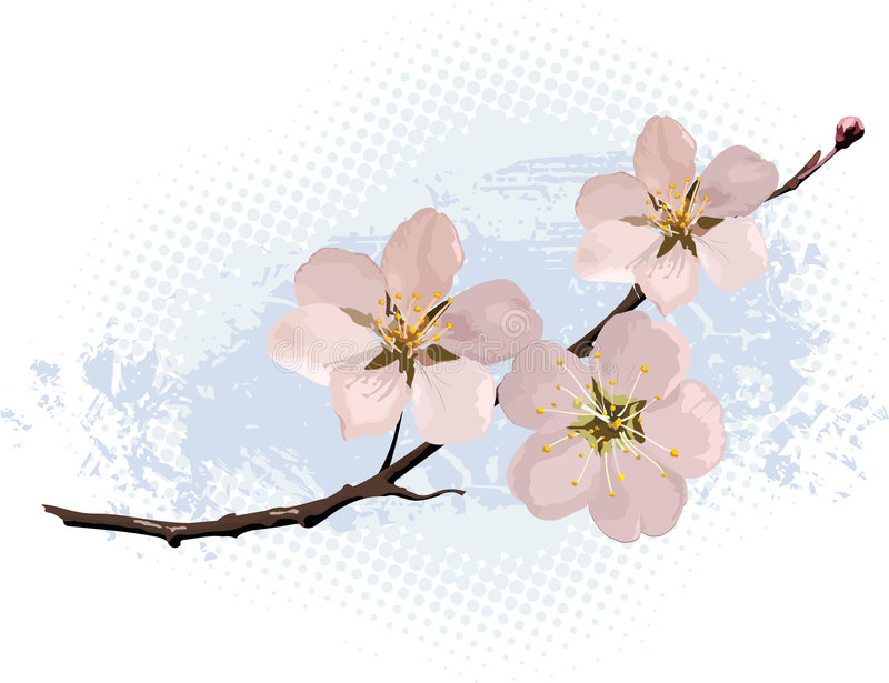 Download Pink cherry blossom stock vector. Illustration of spring - 4492910