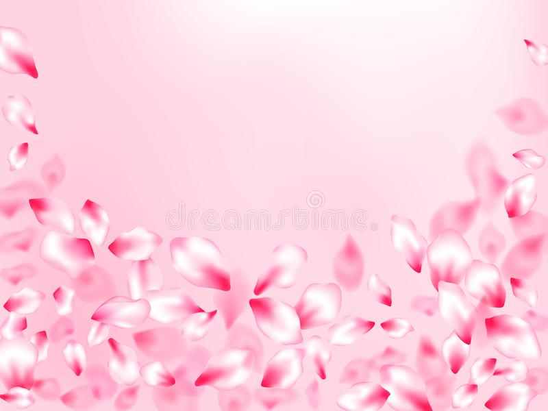 Pink cherry blossom petals isolated on rose color background. Flying sakura flower parts spring wedding vector. royalty free illustration