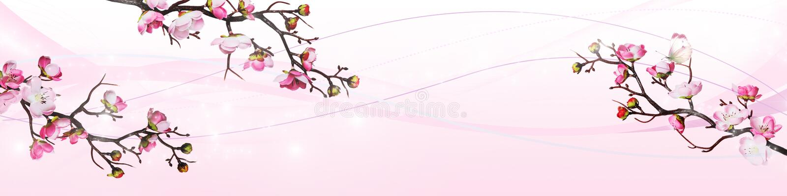 Pink cherry flowers isolated on white background stock illustration