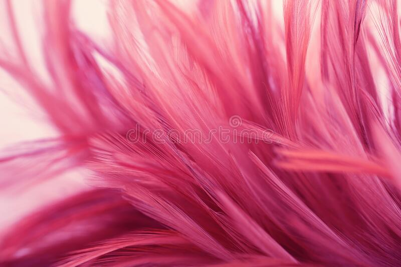 Pink chicken feathers in soft and blur style background. Pink chicken feathers in soft and blur style for background stock photography