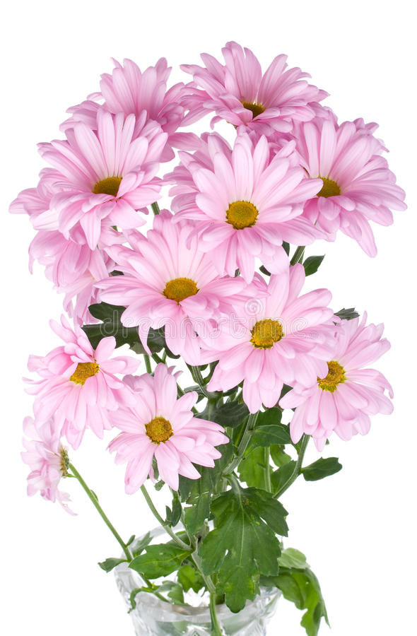 Free Pink Chrysanthemum Flowers Bouquet Royalty Free Stock Photography - 13561507