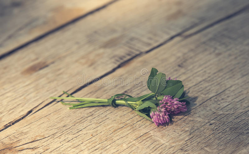 Pink Clover flower on wooden royalty free stock photos
