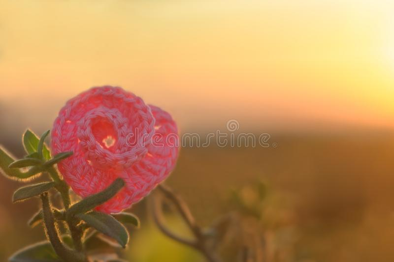 Pink cocheted spiral heart lies on green leaves on backgound of warm sunset light. St.Valentine`s Day theme stock image