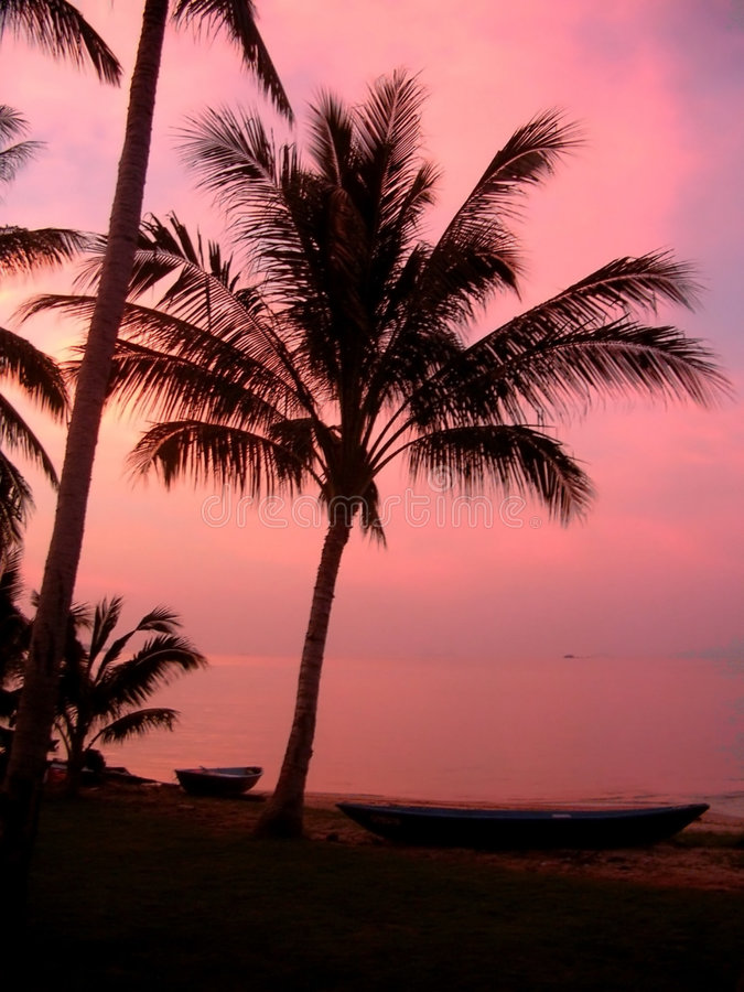 Pink Coconuts royalty free stock image