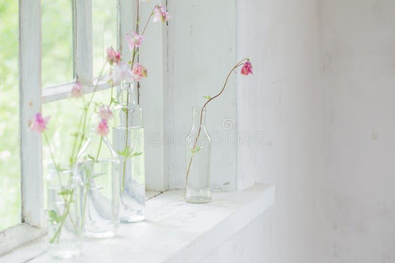 Pink columbines in bottles on windowsill. Pink columbines in bottles on white windowsill stock image