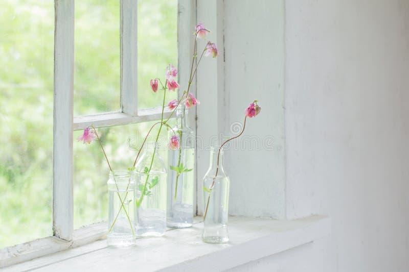 Pink columbines in bottles on windowsill. The pink columbines in bottles on windowsill royalty free stock photo