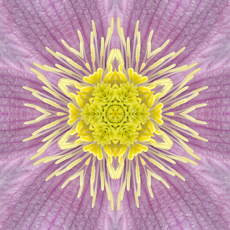 Free Pink Concentric Flower Center Mandala Kaleidoscope Stock Image - 40922661