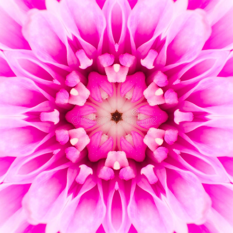 Pink Concentric Flower Center. Mandala Kaleidoscopic design royalty free stock photography