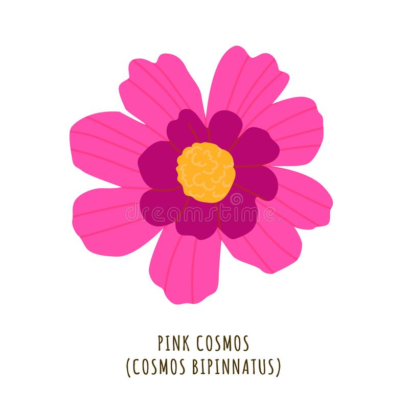 Pink cosmos tropical flower stock illustration