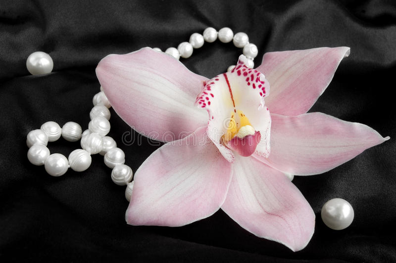 Pink Cymbidium Orchid with pearls on a black silk stock photo