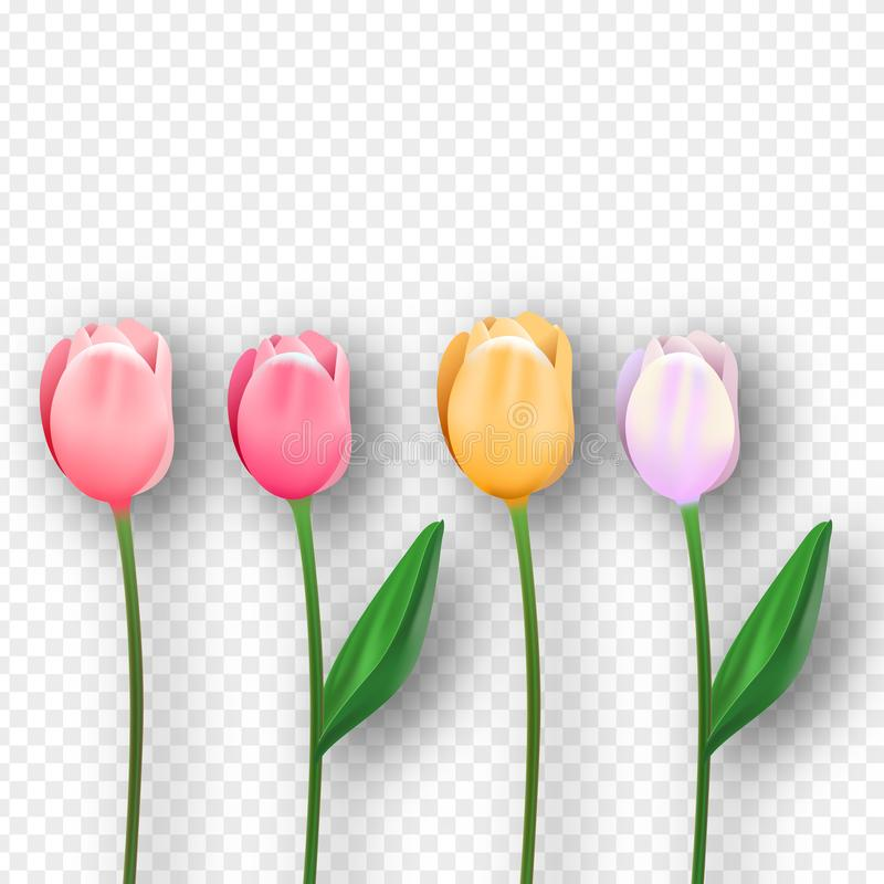 Pink 3d isolated tulip spring flower set royalty free illustration