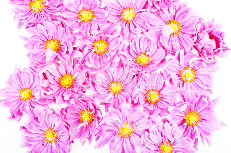 Download Pink daisies stock photo. Image of fresh, abstract, decoration - 15978736
