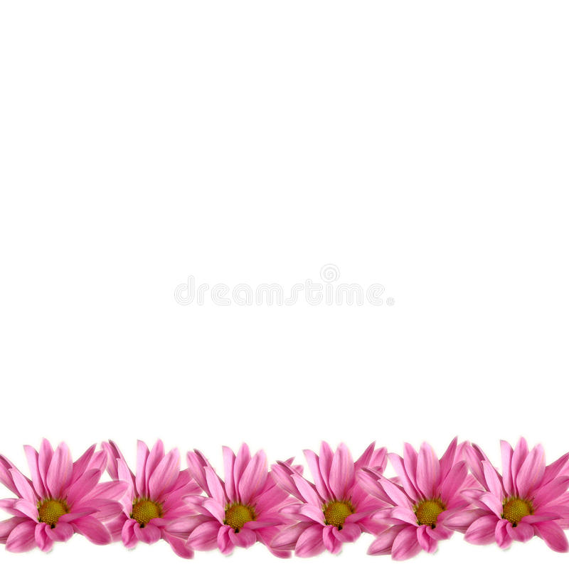 Download Pink Daisies Border On White Stock Image - Image: 16998697