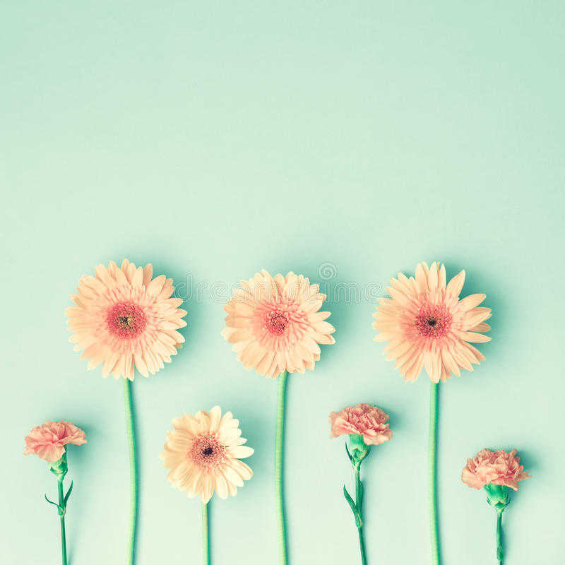 Pink daisies over mint royalty free stock photography