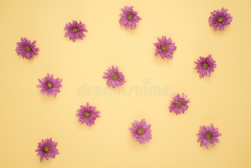 Pink Daisy Flower Lot royalty free stock photos