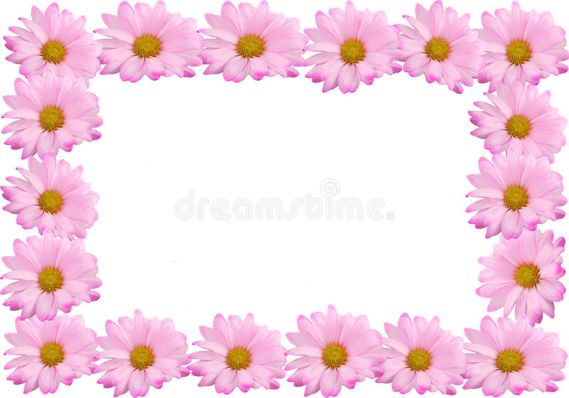 Pink daisy frame or border royalty free stock photography
