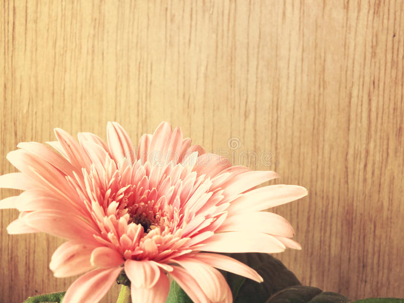 Pink daisy gerbera flowers on wooden background. Vintage tones royalty free stock images