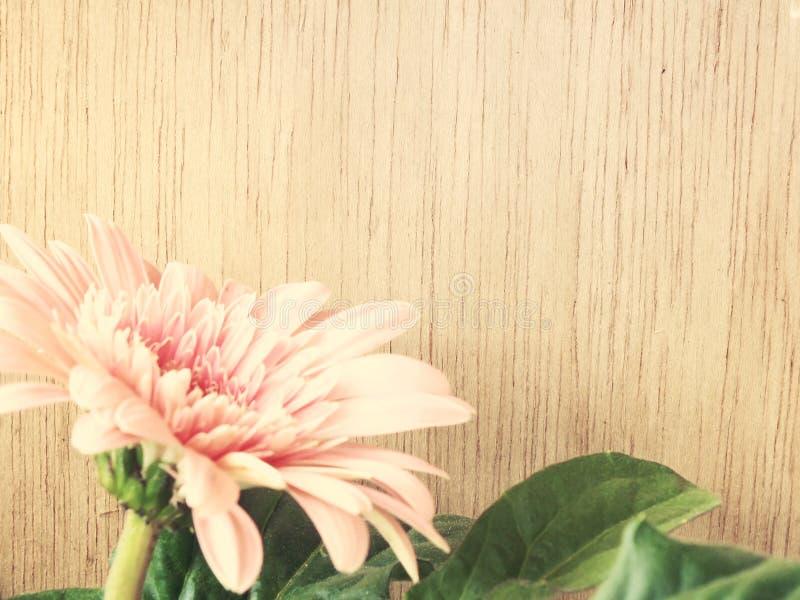 Pink daisy gerbera flowers on wooden background vintage tones. Pink gerbera flowers on wooden background vintage tones stock photography
