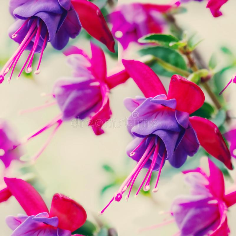 Pink delicate fuchsia flowers. Copy space. Greeting card. Toned. Seamless texture royalty free stock photography