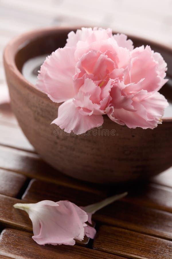 Pink dianthus stock image
