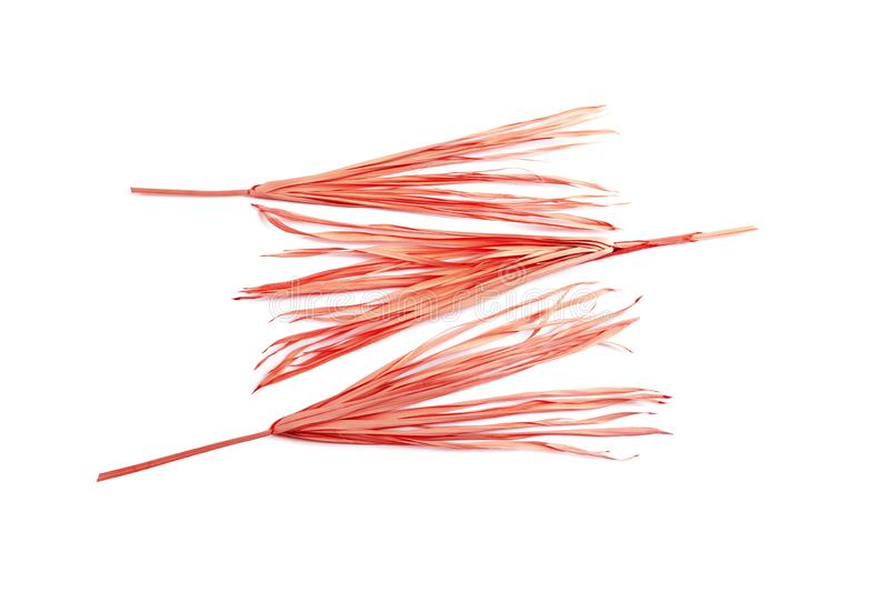 Pink dry branch isolated white background yellow tropical palm grass weed grassy plastic red stock photo