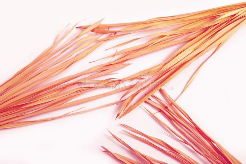 Pink dry branch isolated white background yellow tropical palm grass weed grassy plastic red stock image