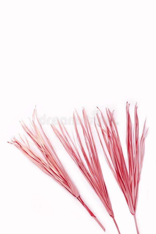 Pink dry branch isolated white background yellow tropical palm grass weed grassy plastic red royalty free stock photo