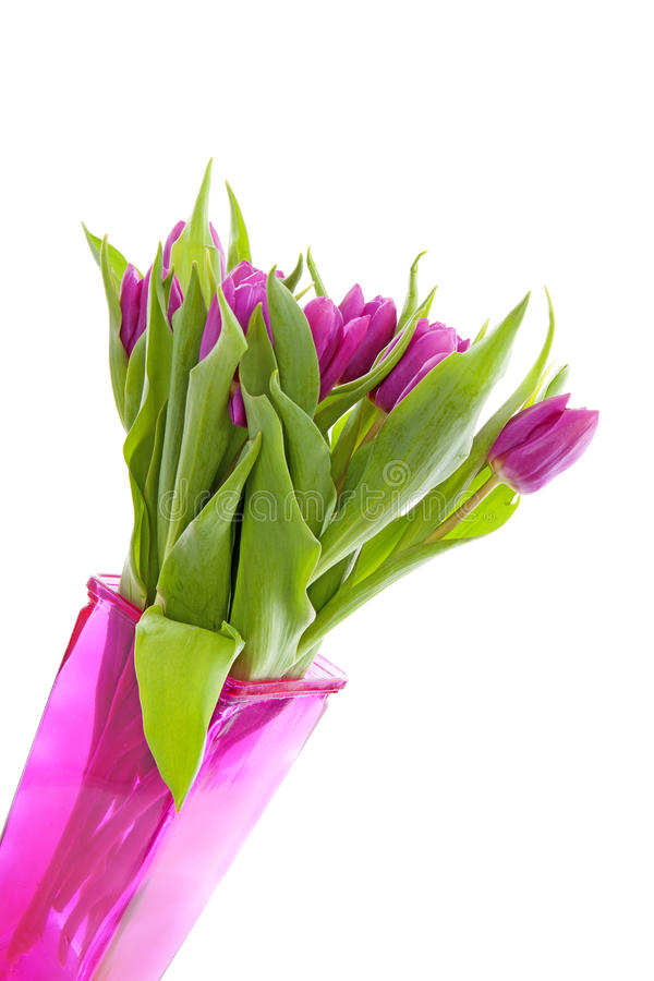 Pink Dutch Tulips In Vase Stock Image Image Of Vase 39063667