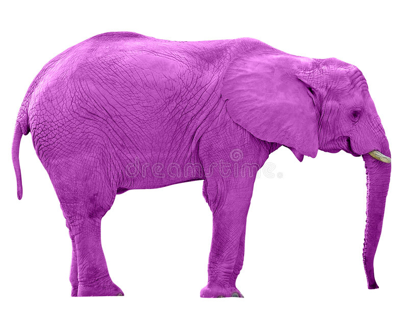 Pink Elephant w/Paths stock images
