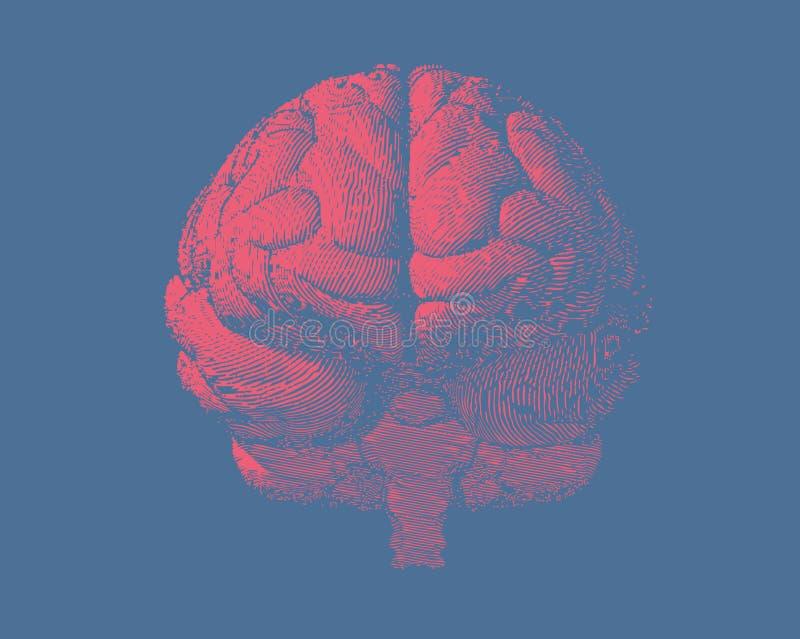 Engraving brain illustration in front view on blue BG stock illustration