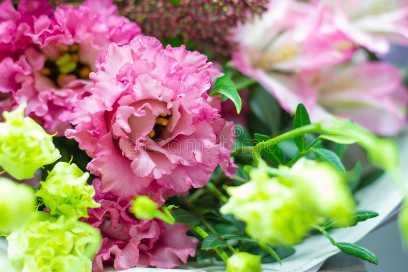 Pink eustoma terry, Lisianthus close-up floral background royalty free stock images