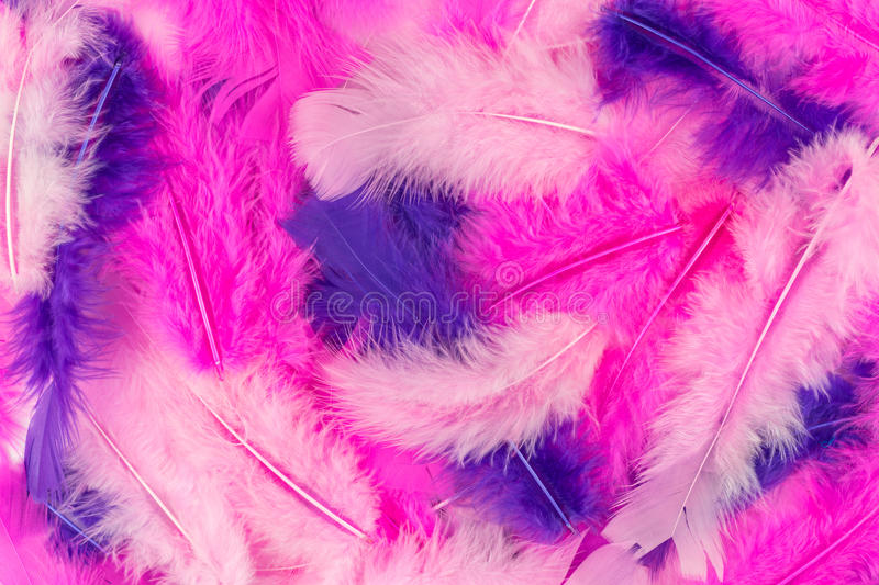 Pink feathers background royalty free stock images