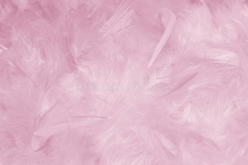 Pink Feathers Background - Stock photos. Pink Feathers Background - Abstract Romantic card for Valentines or Mothers Day or Easter with rose plumes royalty free stock photography