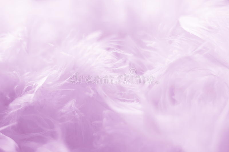 Pink Feathers Background - Stock photos. Pink Feathers Background - Abstract Romantic card for Valentines or Mothers Day or Easter with rose plumes royalty free stock images
