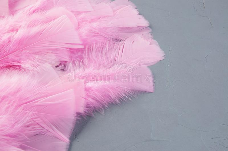 Pink feathers on gray stock photo