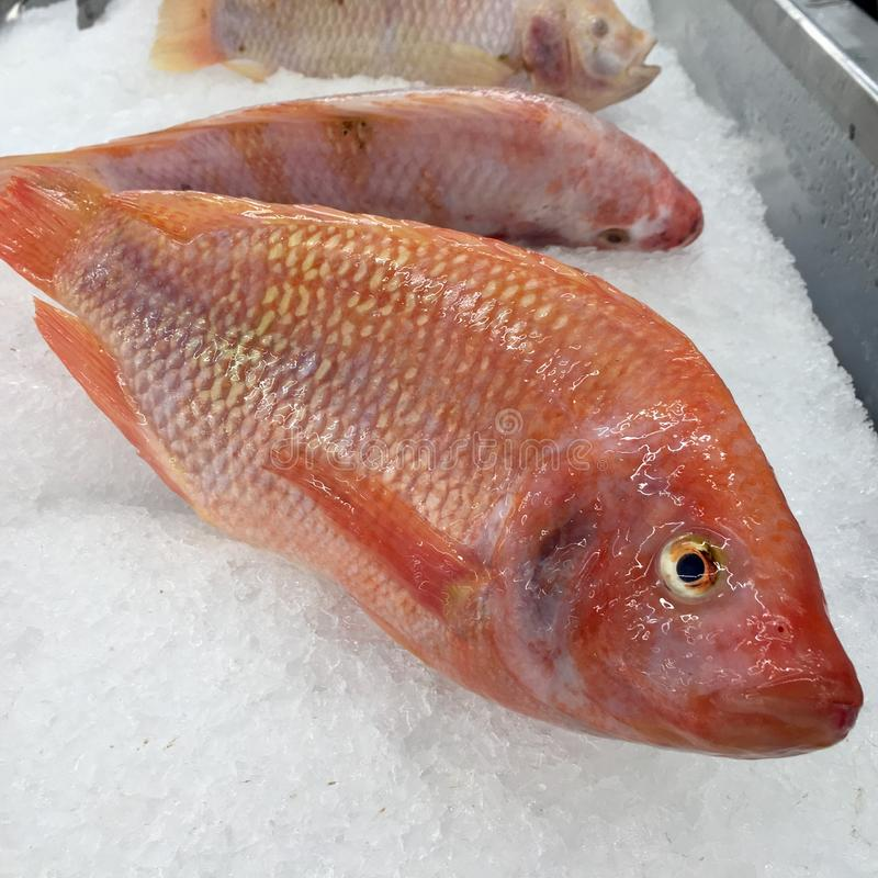 Pink fresh fish on ice ready to shop in super market. Tilapia fresh in stock images