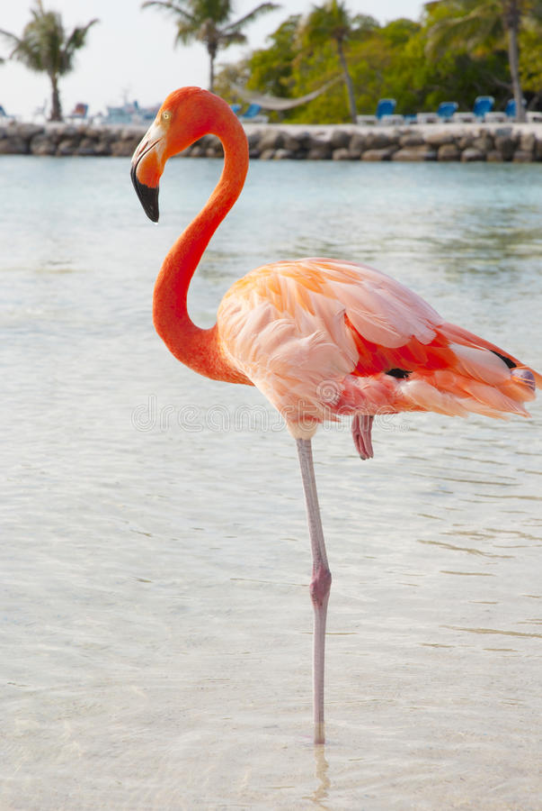 Free Pink Flamingo Stock Images - 29016154