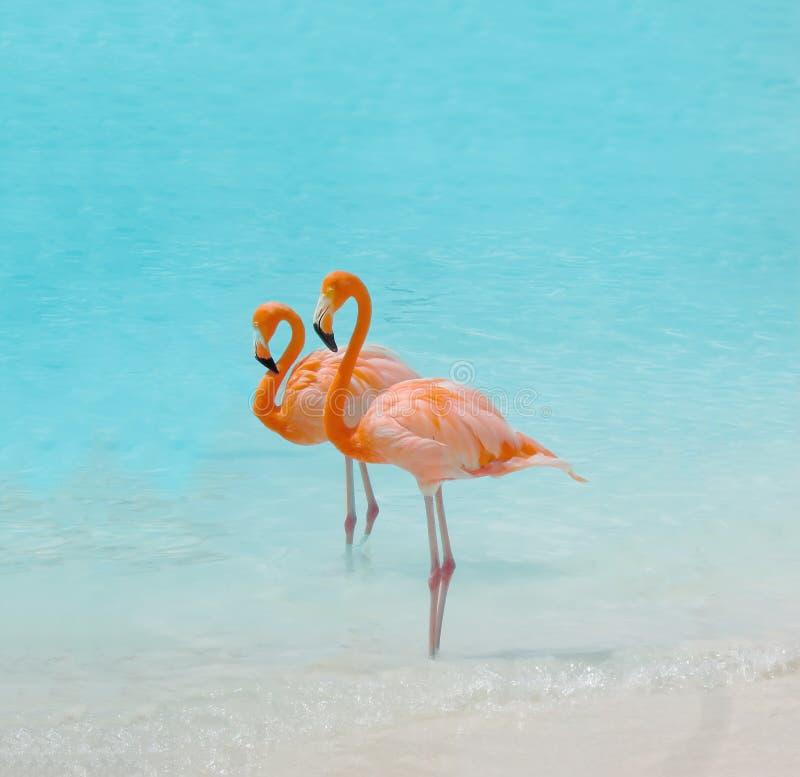 Pink flamingo bird. Against blue water royalty free stock photos
