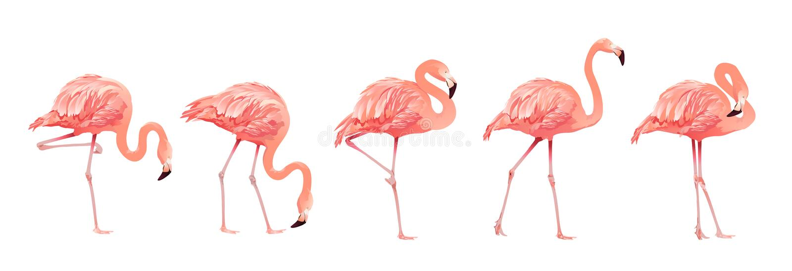 Pink Flamingo Bird Set Tropical Wild Beautiful Exotic Symbol Flat Design Style Isolated on White Background. Vector stock illustration
