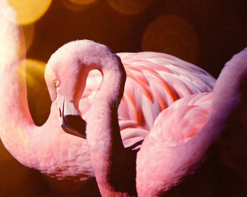 Pink flamingo couple in the sun stock photo