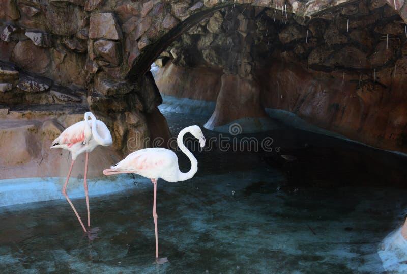 Pink flamingo stock photography