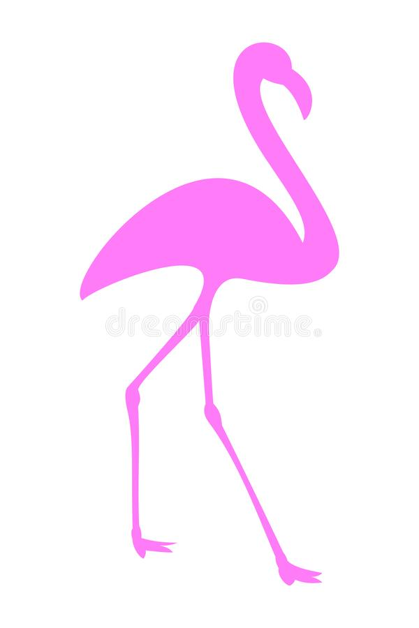 Pink flamingo in transparent or white background royalty free stock photography